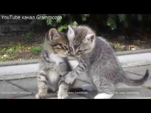 Два котенка (Тимур