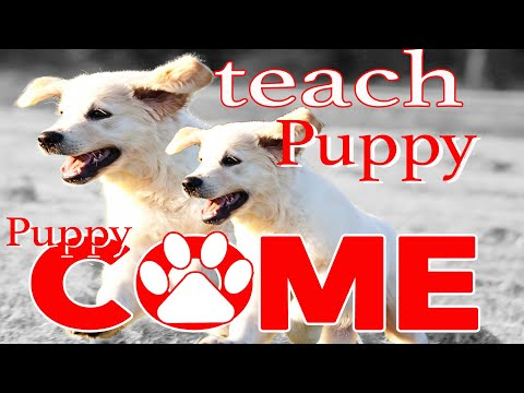 Teach Your Puppy to Come - Puppy Recall Using Prey Drive - Puppy Training