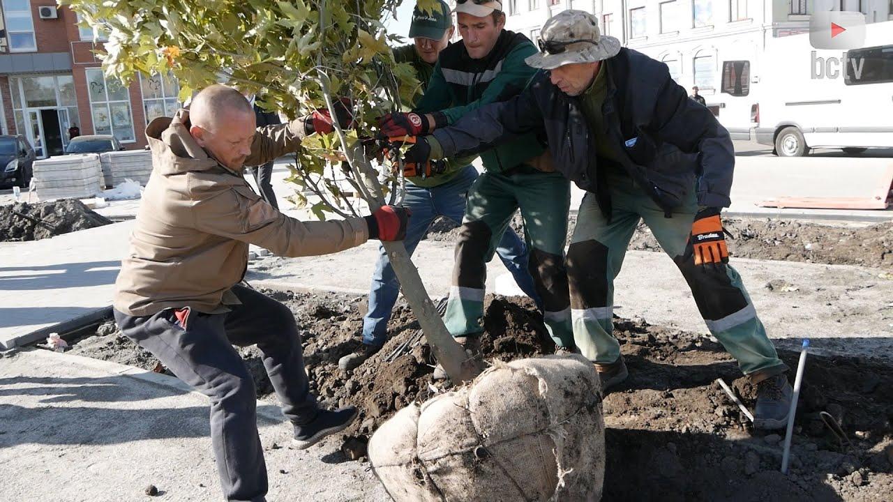 """""""Камуфляжні"""" дерева висадили на Площі Борців за Незалежність"""