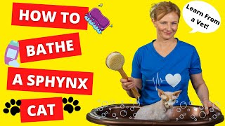 How To BATHE a SPHYNX CAT BY YOURSELF (Vet Demonstrates)