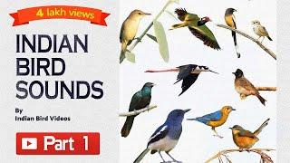 सभी पक्षियों के नाम हिंदी और इंग्लिश में – Birds name and videos in Hindi with sound screenshot 1