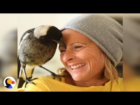 Magpie Bird Saves Family | The Dodo