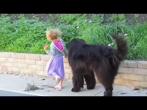 dog-&-baby---best-babysitter---cute-dogs-(part-1)