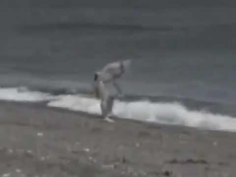 Kinh hoàng cá voi sát thủ tấn công người