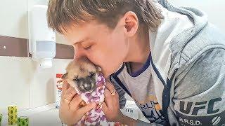 Плач новорожденного щенка и продолжение истории спасения Жалко до слез puppy in an animal shelter