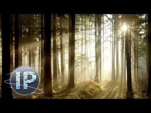 Adobe Oshop Elements Sun Ray Effect Oshop Elements Tutorial