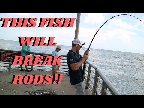 They Should Make This Fish Legal To Keep!! (Sebastian Inlet Fishing) 6000 view challenge