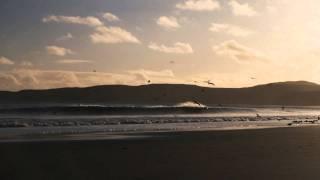 Beach w: Gulls 1.mov