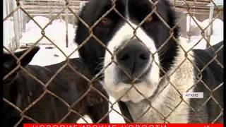 Более 600 бездомных кошек и собак отловили с начала года в Новосибирске