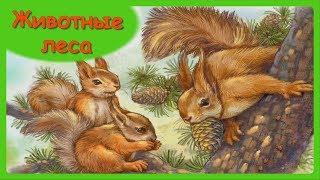 ЛЕСНЫЕ ЖИВОТНЫЕ🐿 Мамы и малыши/Учим с детьми названия лесных животных