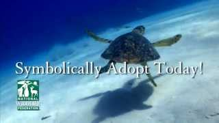 NWF Sea Turtle Adoption Final