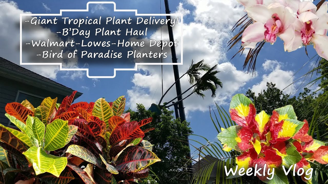 Tropical Plant Delivery B Day Haul Plants At Bird Of Paradise Planters