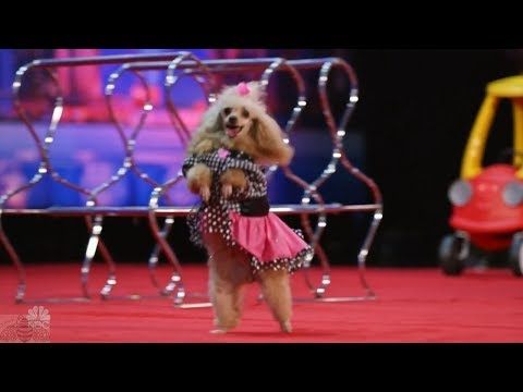 America's Got Talent 2017 The Adorable Pomeyo Dogs Family Full Audition S12E03