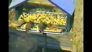 Birds Enjoying Squirrel-off Solar Powered Squirrel Proof Bird Feeder