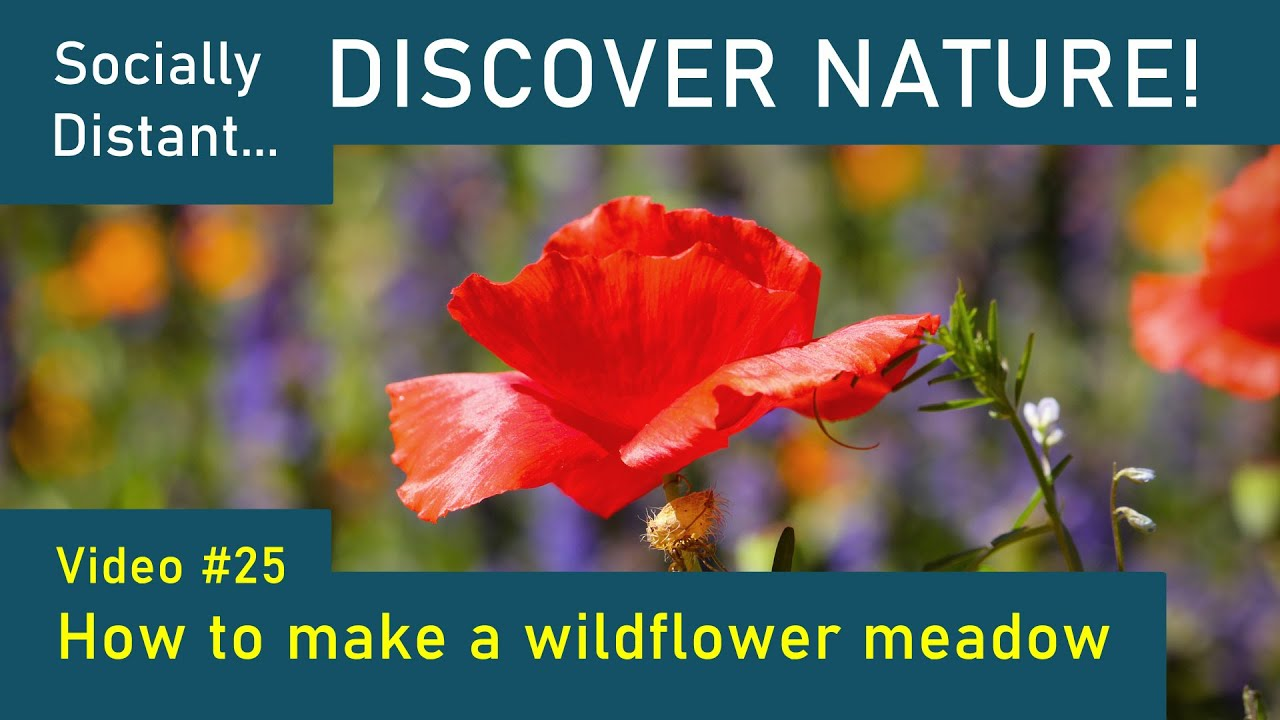 How to make a Wildflower Meadow: Discover Nature Episode 25