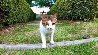 公園の芝生で野良猫が甘えてきた