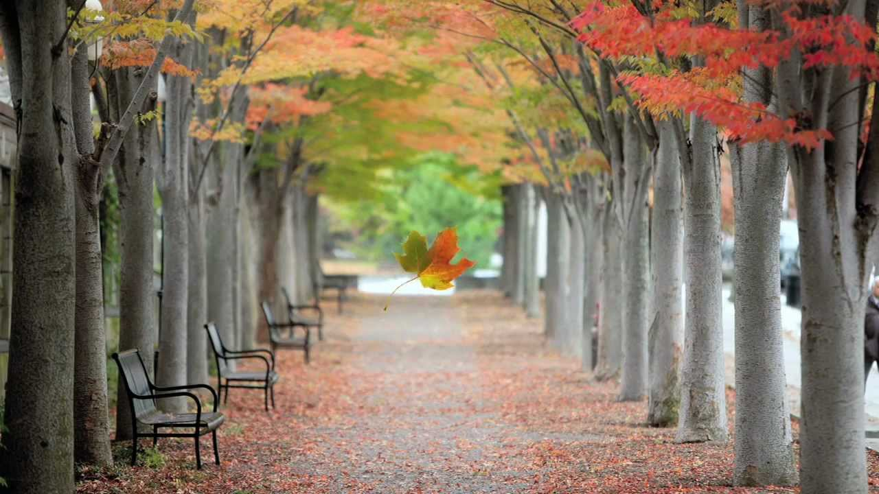 color play princeton in fall youtube
