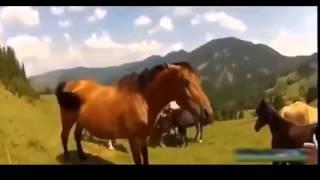 ЖЕСТЬ! Нападения животных на людей  Подборка 18+ ч 3