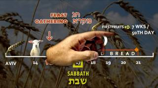 Prophetic Holy Feasts | Counting the Omer