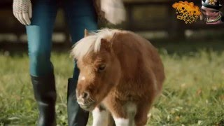A Lonely Little Welsh Horse - Amazon Prime Advert Parody
