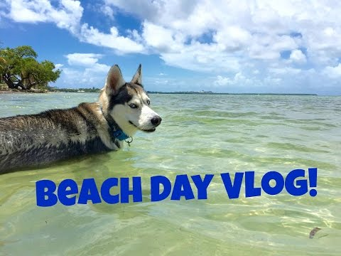 Husky Beach Day Vlog!