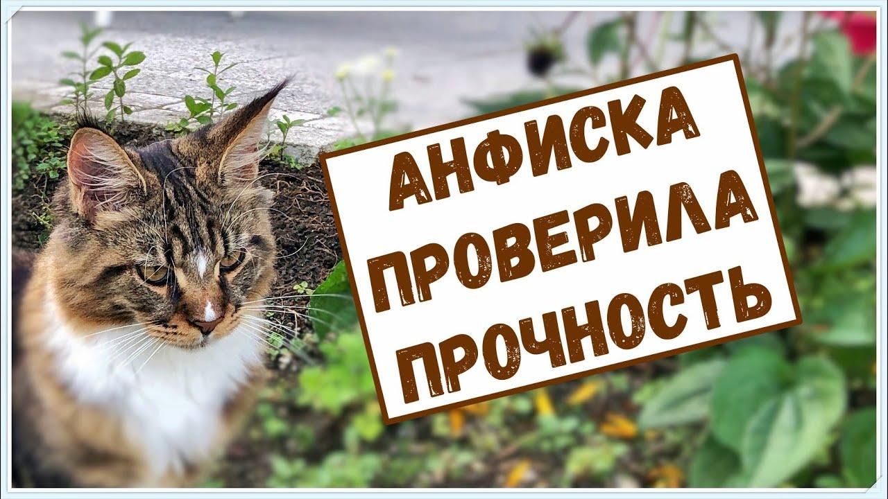 Кошка Анфиска принимает работу