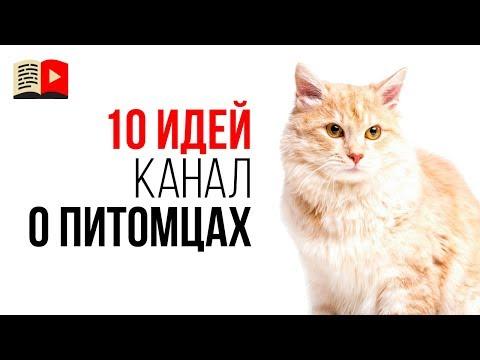 10 идей для каналов про животных. Какие видео снимать про домашних питомцев?