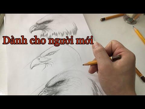 Vẽ đại bàng cho người mới - draw the eagle
