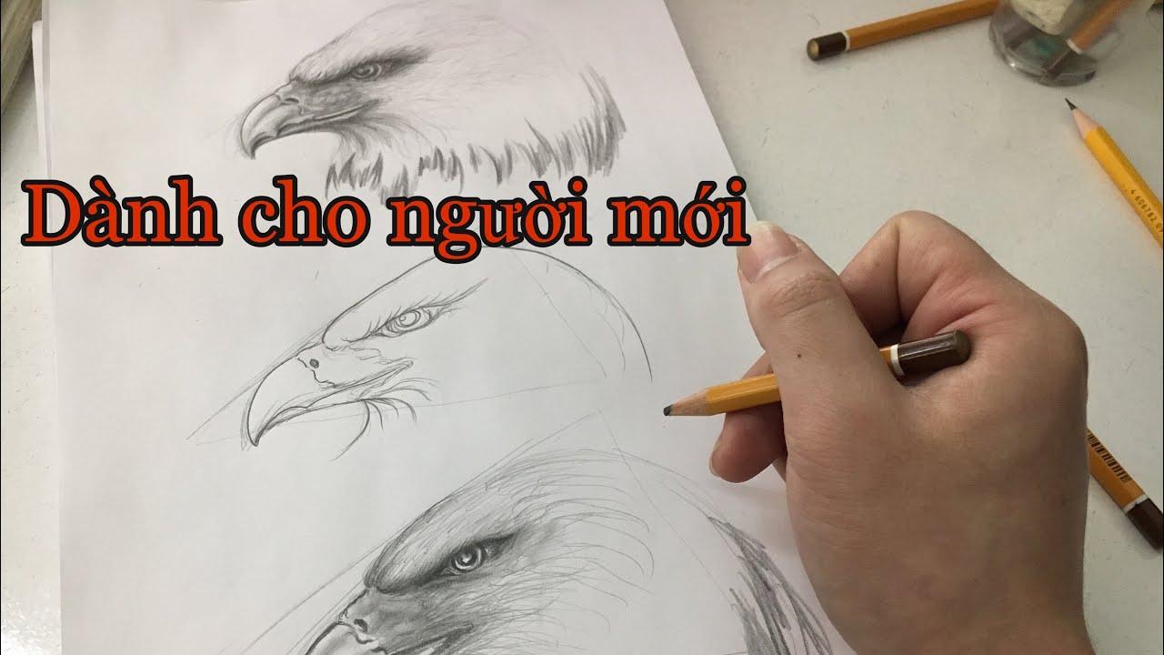 Vẽ đại bàng cho người mới – draw the eagle | Khái quát các nội dung liên quan đến vẽ đại bàng chính xác nhất