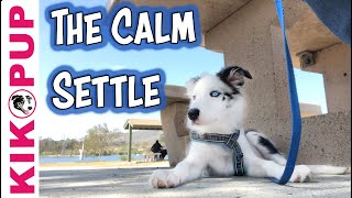 The Calm Settle - for dogs and puppies