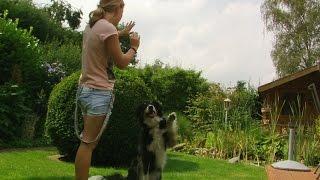 Dogdancing, Trickdogging & Spaß mit dem Hund :)