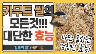 황제의 밀, 카무트 쌀의 모든것! (카무트효능 과 부작…