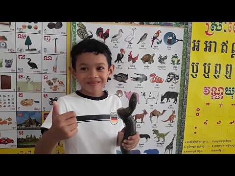 A little boy counts some birds and annimals with Khmer name