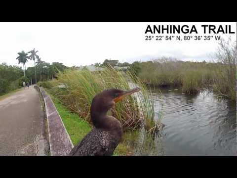 anhinga trail everglades