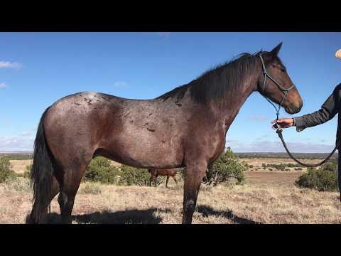 Mustang Magic 2019, Palomas Journey