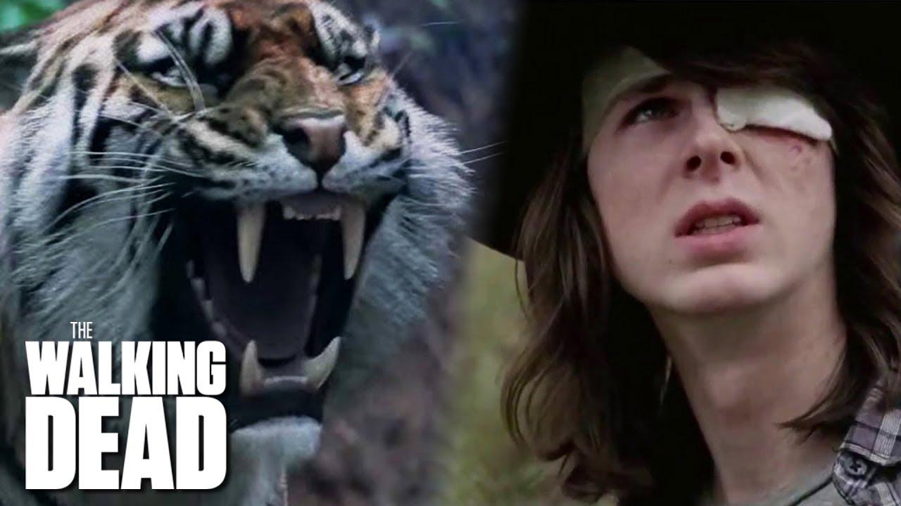 Download Shiva Saves Carl   The Walking Dead Classic Scene   Ep. 716