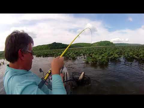 Big Snakehead On The Potomac River
