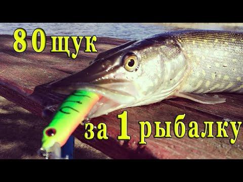 Рыбалка 2020.Ловля щуки на спиннинг.Жор щуки. Поймали 80 щук за одну рыбалку.Рыбалка на спиннинг.