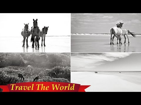 Cumberland Island's wild horses captured in stunning book  - Travel Guide vs Booking
