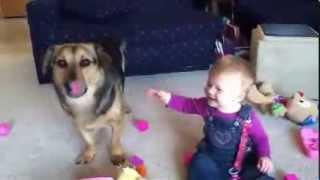 Собака лопает мыльные пузыри