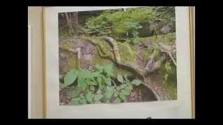 Экологический вестник № 23 (СТС-Биробиджан)(Учебная экологическая тропа заповедника