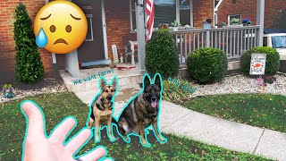 We Have to Move because of Our German Shepherds!