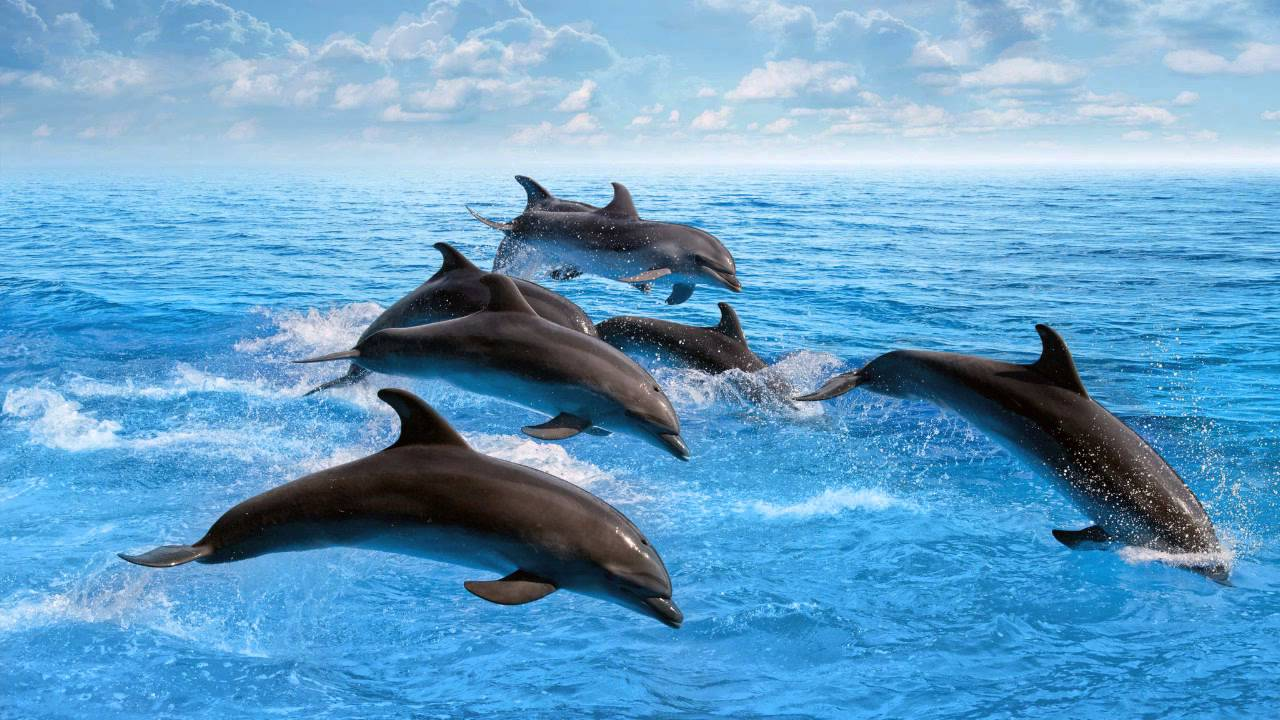 Live 3d Dolphin Wallpaper Musica Relajante Del Mar Sonido De Los Delfines Y El