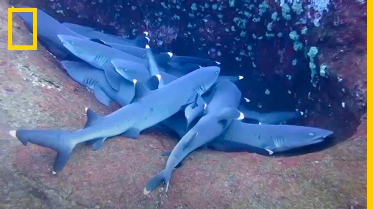 ¿los tiburones comen más por la noche?