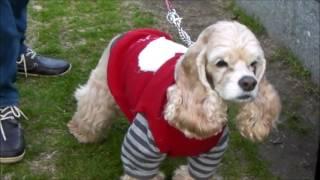 中之島公園のイルミネーションにわんこの友達とクリスマスに行ってきま...