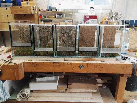 Terrarium umbauen für Mantiden