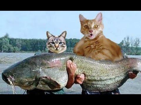 День рыбака (Камчатка; Петропавловск-Камчатский)