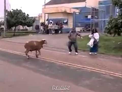 Khali pili khali peeli rokne ka nhi song by goat a