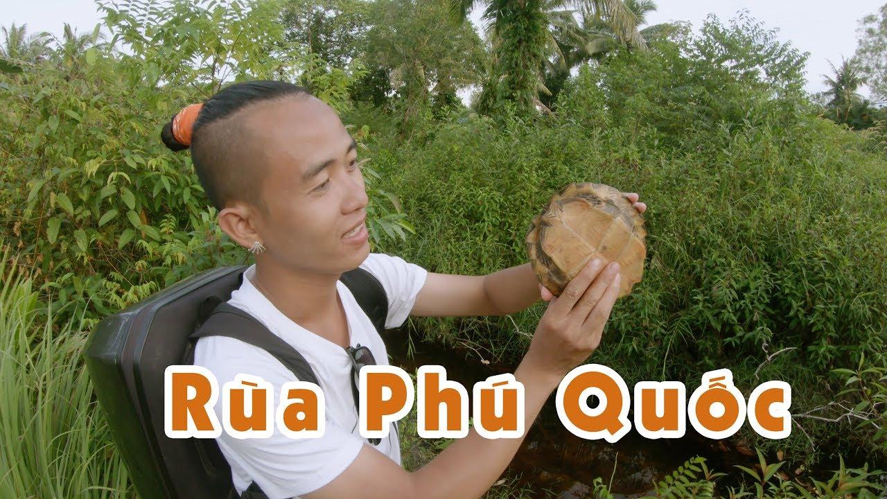 Nhặt Được Rùa Trong Rừng Phú Quốc Và Cái Kết