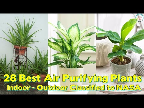 Best Air Purifying Plants ( For Indoor / Outdoor ) Classified to NASA